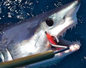 shark_fishing