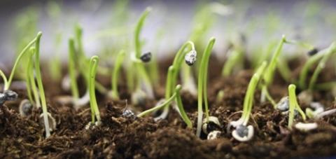 germinate-vegetable-seeds