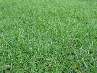 plant-decorative-grass