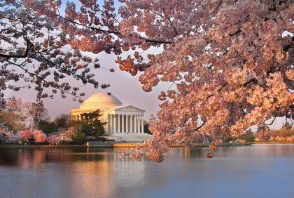 National Cherry Blossom Festival Washington DC