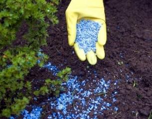 best_fertilizers_for_flowers